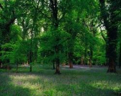 Szum lasu, śpiew ptaków