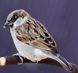 Kojący śpiew ptaków